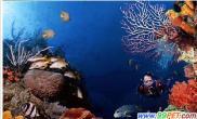 国内六大顶级海洋世界神奇浪漫蜜月之选(图)