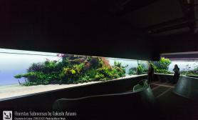 天野尚先生的里斯本海洋水族馆40米巨型水草缸