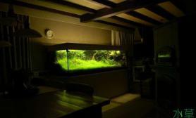 大片珍珠草做前景水草缸珍珠草的海洋水草缸你见过吗?