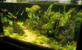 60-30-36的草缸+热带鱼