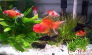 如何避免鱼缸高温导致的缺氧
