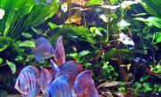 水草造景缸适合添加那些类型的鱼(多图)