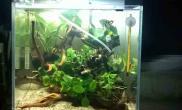 我的水榕为何烂叶烂根啊鱼缸水族箱知道的朋友进来一下鱼缸水族箱