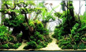 水草造景观赏鱼缸造景