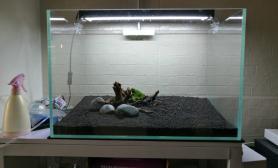 开个60缸水草缸给鱼改善下住房