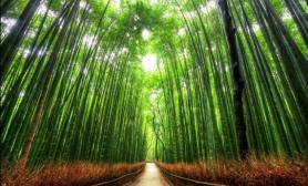 自然遗产图鉴03水草缸造景十个最美的树隧道