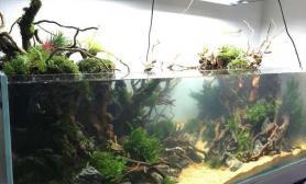 完成了60%就差珊瑚莫斯和美风了水草缸