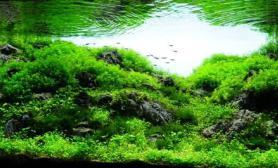 AquascapingContest2010inVietnam越南尺寸设计