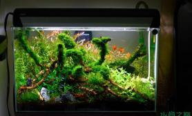 鱼缸造景水草造景--盘根之春