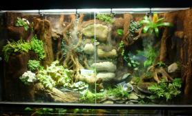雨林水陆生态缸32
