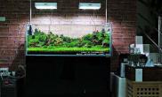 绿绿的松皮石景缸水草缸这个绿我喜欢鱼缸水族箱