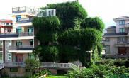 【亮点新闻】义乌市民将自家住宅打造成绿色城堡