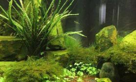 水草造景添加背景的效果
