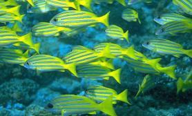 养海水鱼海水的配置(图)