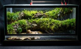 雨林水陆生态缸21