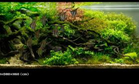 水草缸造景沉木水草泥化妆砂青龙石150CM及以上尺寸设计52