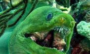 最恐怖的恶魔鱼(多图)