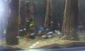 我也来个小缸森林造景