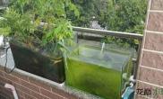 我家的水草缸和水陆
