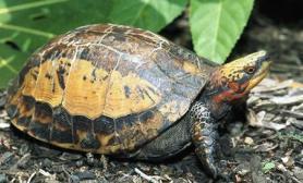 龟甲护理让爱龟更美丽