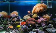 海洋生物迷你珊瑚礁