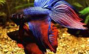 长期使用加氧泵对观赏鱼的影响