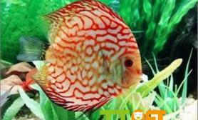 鱼缸杀菌灯选择方法