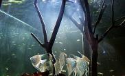亚马逊造景大方缸水草缸不间断更新(10月26日更新4张照片水草缸含全景和入鱼照) 水族箱