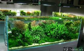 ADA作品:1图片2米以上大缸水草缸带缸美照(二)