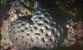 珊瑚的共生藻和白化现象