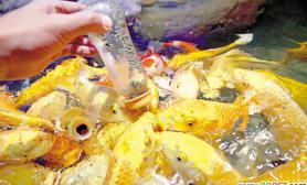 """广州海洋馆新引进的200条""""吃奶鱼""""正式与游客见面(图)"""