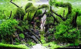 丰收的季节:水草造景(45CM及以下)