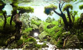 沉木青龙石水草造景45CM及以下尺寸设计44