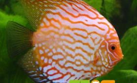 挑选热带鱼的方法有哪些