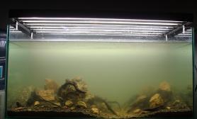 水草缸造景沉木水草泥化妆砂青龙石90CM尺寸设计27