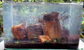 鱼缸造景新开的35小缸水草缸求指点