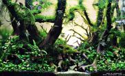 妖精深林水景作品欣赏60CM缸