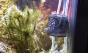 一缸气泡水草缸试验证明水草缸试验证明水草缸30度养水草是没问题的