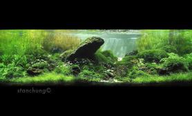 水草缸造景沉木水草泥化妆砂青龙石150CM及以上尺寸设计28