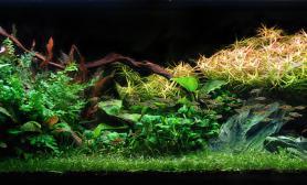 水草缸造景沉木水草泥化妆砂青龙石150CM及以上尺寸设计26
