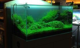 水草缸造景沉木水草泥化妆砂青龙石90CM尺寸设计90