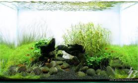水草缸造景沉木水草泥化妆砂青龙石90CM尺寸设计45