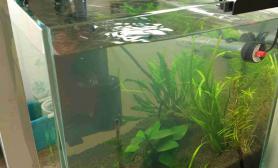 开个水晶虾缸水草缸不能放石头未免遗憾