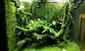 雨林水陆空气兰苔藓生态缸