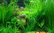 鱼缸水变绿的正确处理方法