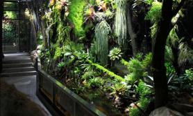 分享一个18米巨型雨林