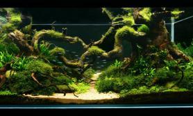 水草缸造景沉木水草泥化妆砂青龙石120CM尺寸设计84