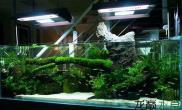 散散毒吧鱼缸水族箱150缸又翻了水草缸盆友的镇店沉木和碳化石组合沉木杜鹃根青龙石水草泥