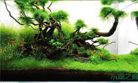 水草造景作品:水草造景(60cm)-60