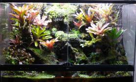 雨林水陆生态缸Revolutio作品